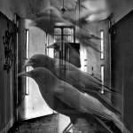 photo manipulation, crows, birds, doors, black, open, fly