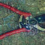 #cutting, #scissors, #maps, #motherland, #plants, #growth,